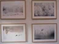 Morten Hilmer: Naturfotografier, nordisk stilhed